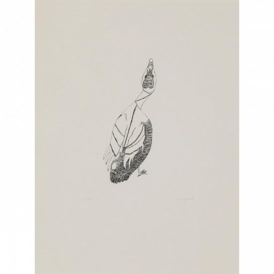Kananginak Pootoogook, Eider duck, 32/50, 1962/27 1962, Engraving